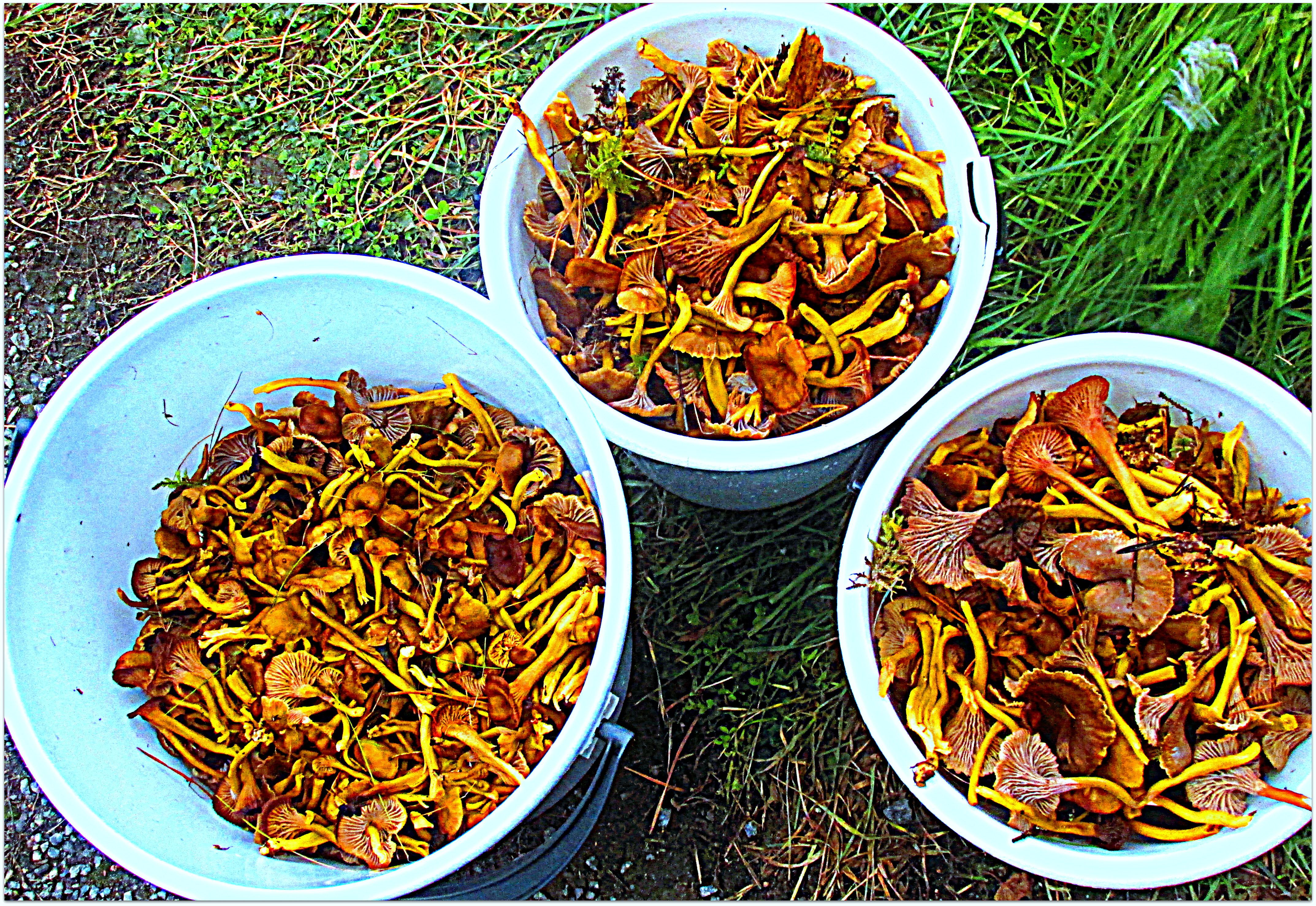 sieniä 2